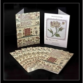 Greeting Cards ~ Elizabeth Harding ~  Pkg of 10 with Envelopes from Hands Across the Sea Samplers ~