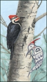 Woodpecker from the Stitching Studio / Sue Coleman